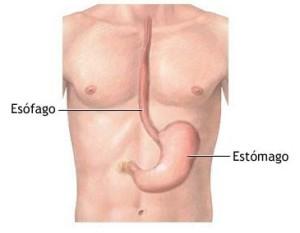 estomago e esofago refluxo gastroesofagico caminho do suco gastrico