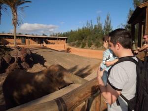 oasis park zologico em fuerteventura as melhores viagens de pititico 2