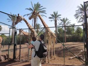 oasis park zologico em fuerteventura as melhores viagens de pititico