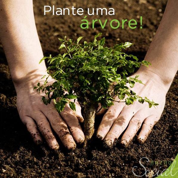 Plante Uma Árvore e Garanta o Futuro dos Seus Filhos e Netos