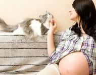 Toxoplasmose na Gravidez – Como Previnir e Como Tratar