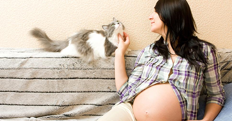 Toxoplasmose na Gravidez Como Previnir e Como Tratar