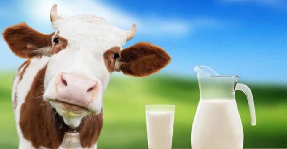 Porque Aqui em Casa Não Tomamos mais Leite de Vaca